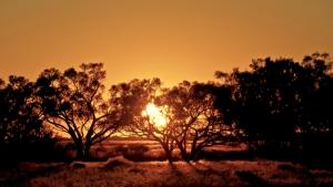 australian desert 3