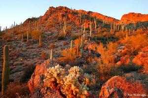 sonoran desert 1