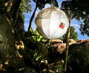 cocoon-tree