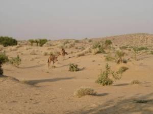 canaan desert