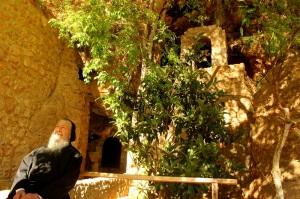 Dario hermitage