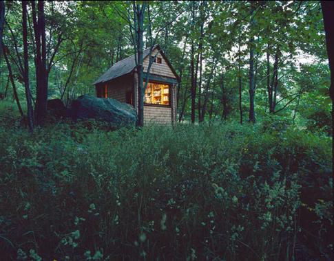 A Cabin Alone In The Woods Citydesert