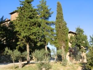Leopold  convent