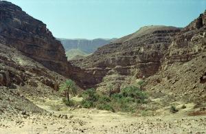eastern desert 3