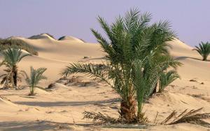 oasis_dakhia_sahara_desert_egypt_42077-1440x900