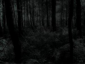 seeing-in-the-dark
